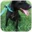 Photo 2 - Labrador Retriever Dog for adoption in kennebunkport, Maine - Angel - in Maine!