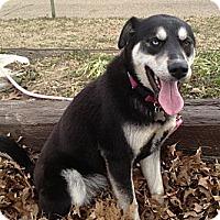 Adopt A Pet :: Wilson - Richmond, VA