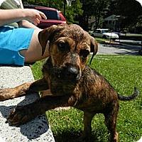 Adopt A Pet :: Levi - South Jersey, NJ