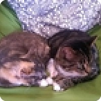 Adopt A Pet :: Tiger Rotsey - Vancouver, BC