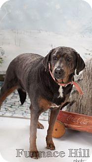 Labrador Retriever Mix Dog for adoption in South Park, Pennsylvania - Lulu