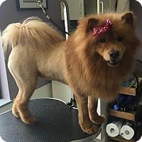 Adopt A Pet :: Cara - Dix Hills, NY
