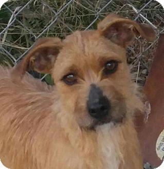 Terrier (Unknown Type, Small) Mix Dog for adoption in Harrisonburg, Virginia - Sadie