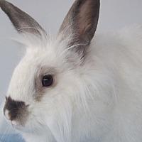 Adopt A Pet :: Hanna - Hahira, GA