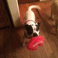 Adopt A Pet :: Graham MH - Columbia, TN