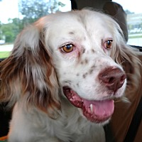 Adopt A Pet :: CLIFF - Pine Grove, PA