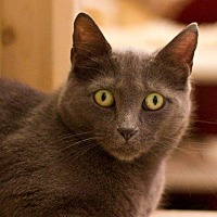 Adopt A Pet :: Cailyn - Grayslake, IL