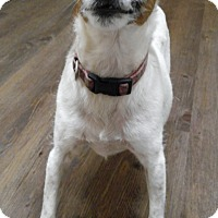 Adopt A Pet :: Biscotti - Cloquet, MN