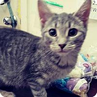 Adopt A Pet :: Barley - Trevose, PA