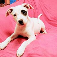 Adopt A Pet :: ASPEN - Minnesota, MN