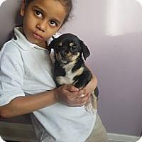 Adopt A Pet :: Carrie - Cincinnati, OH