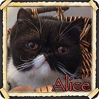 Adopt A Pet :: Alice - Beverly Hills, CA
