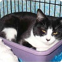 Adopt A Pet :: Christiana - Colmar, PA