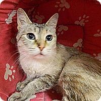 Adopt A Pet :: Ava - The Colony, TX