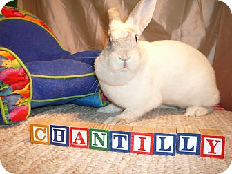 Other/Unknown Mix for adoption in Newport, Delaware - Chantilly