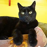 Adopt A Pet :: Lucy Lou - Alameda, CA