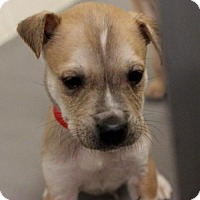 Adopt A Pet :: Mork - Atlanta, GA