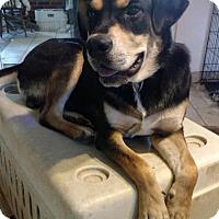 Adopt A Pet :: Sundown - Bakersville, NC