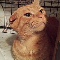 Adopt A Pet :: Onie - Clarkson, KY