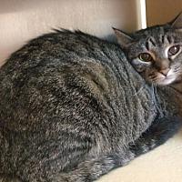 Adopt A Pet :: Faith - Avon, OH