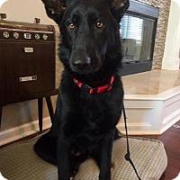 Adopt A Pet :: Ruby (adoption pending) - Kansas City, MO