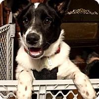 Adopt A Pet :: Casper - CARISLE, PA