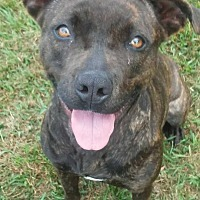 Plott Hound Mix Dog for adoption in Jacksonville, Florida - Molly