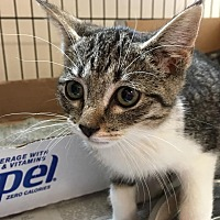 Adopt A Pet :: Mojito - East Brunswick, NJ