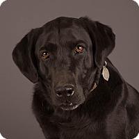 Adopt A Pet :: Jaela - Salem, OR