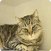 Adopt A Pet :: OLIVER - Murray, UT