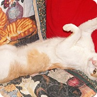 Adopt A Pet :: BARNACLE - EXTREME LOVER! - Plano, TX