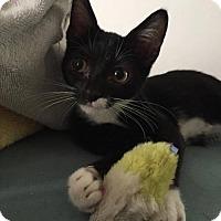 Adopt A Pet :: Minnie - Trexlertown, PA