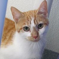 Adopt A Pet :: Carolina - Cumberland, ME