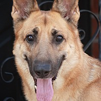 Adopt A Pet :: Guinness von Gusten - Los Angeles, CA
