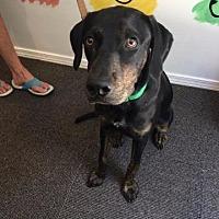 Adopt A Pet :: Xanadu - Crocker, MO