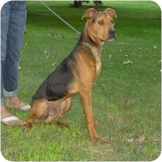 German Shepherd Dog/Rottweiler Mix Dog for adoption in Chicago, Illinois - Duke