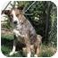 Photo 3 - Border Collie Dog for adoption in San Pedro, California - ELLIE