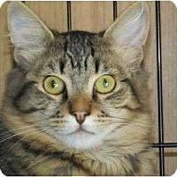 Adopt A Pet :: Tyler - Rancho Cordova, CA