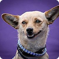 Adopt A Pet :: Bingo - Poway, CA