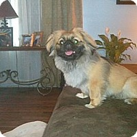 Adopt A Pet :: sparky - Murfreesboro, TN