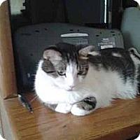 Adopt A Pet :: Godiva - Chandler, AZ