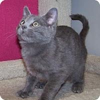 Adopt A Pet :: K-Samples4-Ashes - Colorado Springs, CO