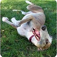 Adopt A Pet :: Lucy (Jax Lucy) - Louisville, KY