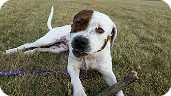 Pit Bull Terrier Mix Dog for adoption in Fort Wayne, Indiana - Miracle