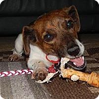 Adopt A Pet :: Isabella - Wisconsin Dells, WI
