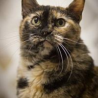 Adopt A Pet :: Maggie Magpie - Belton, MO