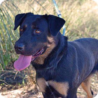 Shepherd (Unknown Type)/Rottweiler Mix Dog for adoption in Sierra Vista, Arizona - Kara