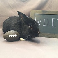 Adopt A Pet :: Wiley - Columbus, OH