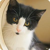 Adopt A Pet :: Levi - East Hartford, CT