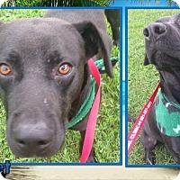 Adopt A Pet :: Rocket - Ringwood, NJ